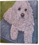 Cockapoo Canvas Print