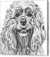 Cocker Spaniel Detail Canvas Print