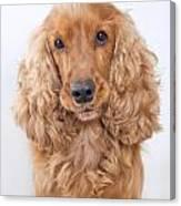 Cocker Spaniel Dog Portrait Canvas Print