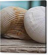 Cockle And Sea Urchin Canvas Print