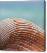 Cockle Shell Canvas Print