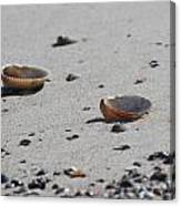 Cockle Shells On Little Island Canvas Print