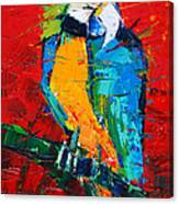 Coco The Talkative Parrot Canvas Print