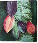 Cocoa Pods Canvas Print