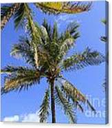 Cocoanut Palm Trees Sky Background Canvas Print