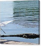 Crocodile In Cancun Canvas Print