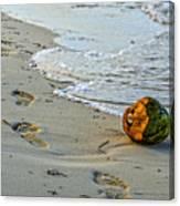 Coconut On The Sand Canvas Print