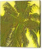Coconut Palm Canvas Print