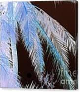 Coconut Palm - Reunion Island - Indian Ocean Canvas Print