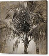 Coconut Palm Tree Canvas Print
