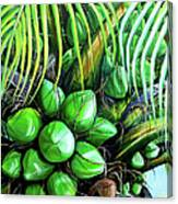 Coconut Tree   Sold Canvas Print