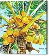 Coconut Series II Canvas Print
