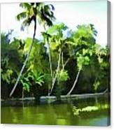 Coconut Trees And Other Plants In A Creek Canvas Print