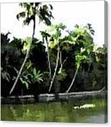 Coconut Trees And Others Plants In A Creek Canvas Print