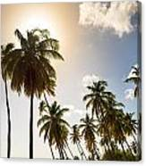 Coconut Trees Canvas Print