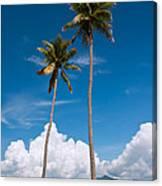 Coconut Trees Canvas Print