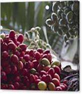 Cocos Nucifera - Niu Mikihilina - Palma - Niu - Arecaceae -  Palmae Canvas Print