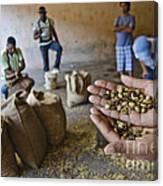 Coffee Beans Santo Domingo Canvas Print
