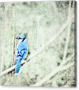 Cold Day For A Blue Jay Canvas Print