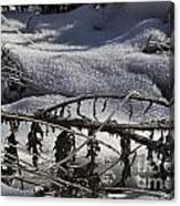 Cold Death Canvas Print