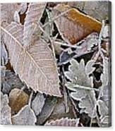 Cold Leaves Canvas Print