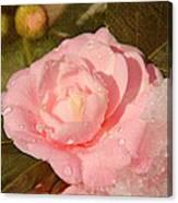 Cold Swirled Camellia Canvas Print