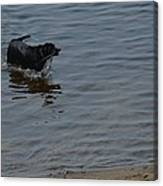 Cold Water Fetch Canvas Print
