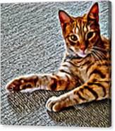 Cole Kitty Canvas Print
