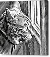 Cole Kitty Watchful Canvas Print