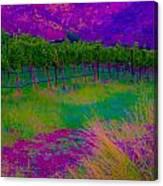 Colibri Acid 3 Canvas Print