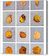 Collage - Leaves On Granite 1 Canvas Print
