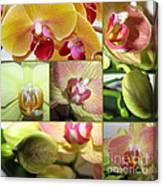 Collage Orchids 01yellow Green - Elena Yakubovich Canvas Print
