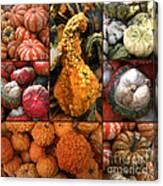 Collage - Pumpkins - Gourds - Elena Yakubovich Canvas Print