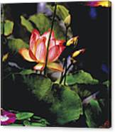 Sunset Lily Canvas Print