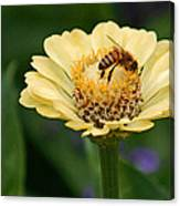 Collecting Nectar Canvas Print
