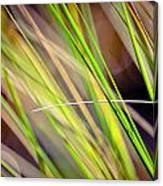 Collier-seminole Sp 13 Canvas Print