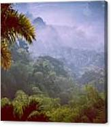 Colombia Forrest Canvas Print