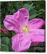 Colonial Rose - Floral Canvas Print