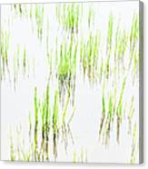 Colony Of Grass Canvas Print