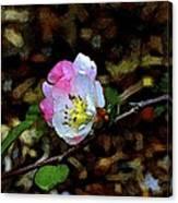 Color 131 Canvas Print