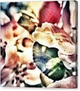 Color Me Pretty... Canvas Print