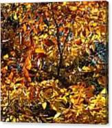 Color Rush Canvas Print