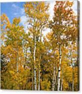 Colorado Autumn Aspens  Canvas Print