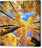 Colorado Autumn Sky Canvas Print
