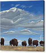 Colorado Bison Moving On Canvas Print