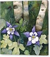 Colorado Columbines Canvas Print