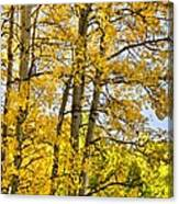 Colorado Fall Aspens 2 Canvas Print