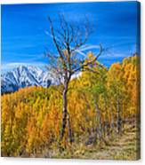 Colorado Fall Foliage Back Country View Canvas Print