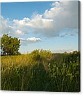 Colorado June Evening Landscape Canvas Print