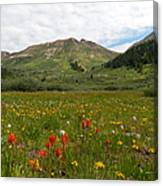 Colorado Meadow And Mountain Landscape Canvas Print
